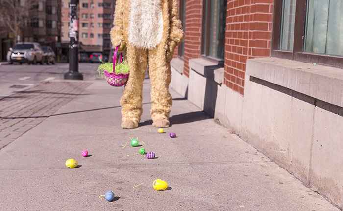 A rabbit leaves a tempting trail of eggs on the ground
